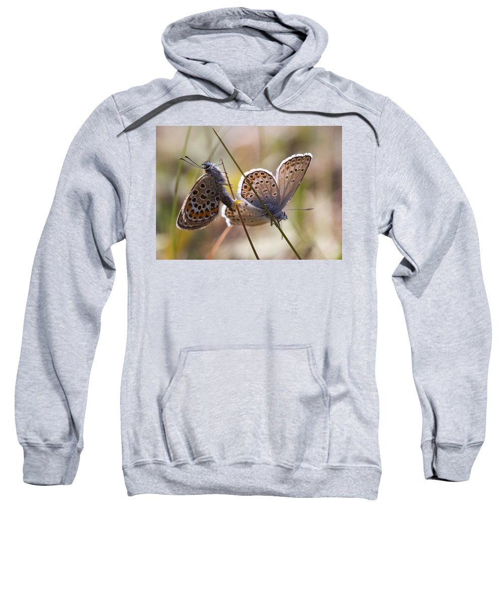 Butterfly Sweatshirt featuring the photograph Silver-studded Blue Butterflies by Bob Kemp