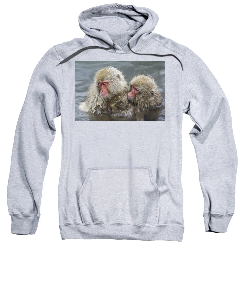 Snow Monkey Sweatshirt featuring the photograph Snuggling Snow Monkeys by Michele Burgess