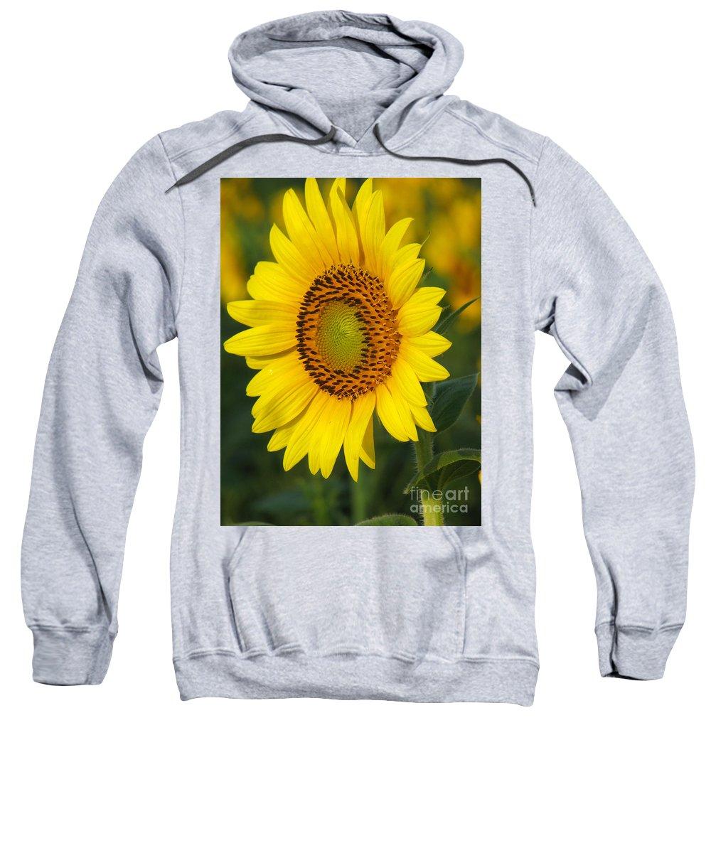 Sunflowers Sweatshirt featuring the photograph Sunflower by Amanda Barcon