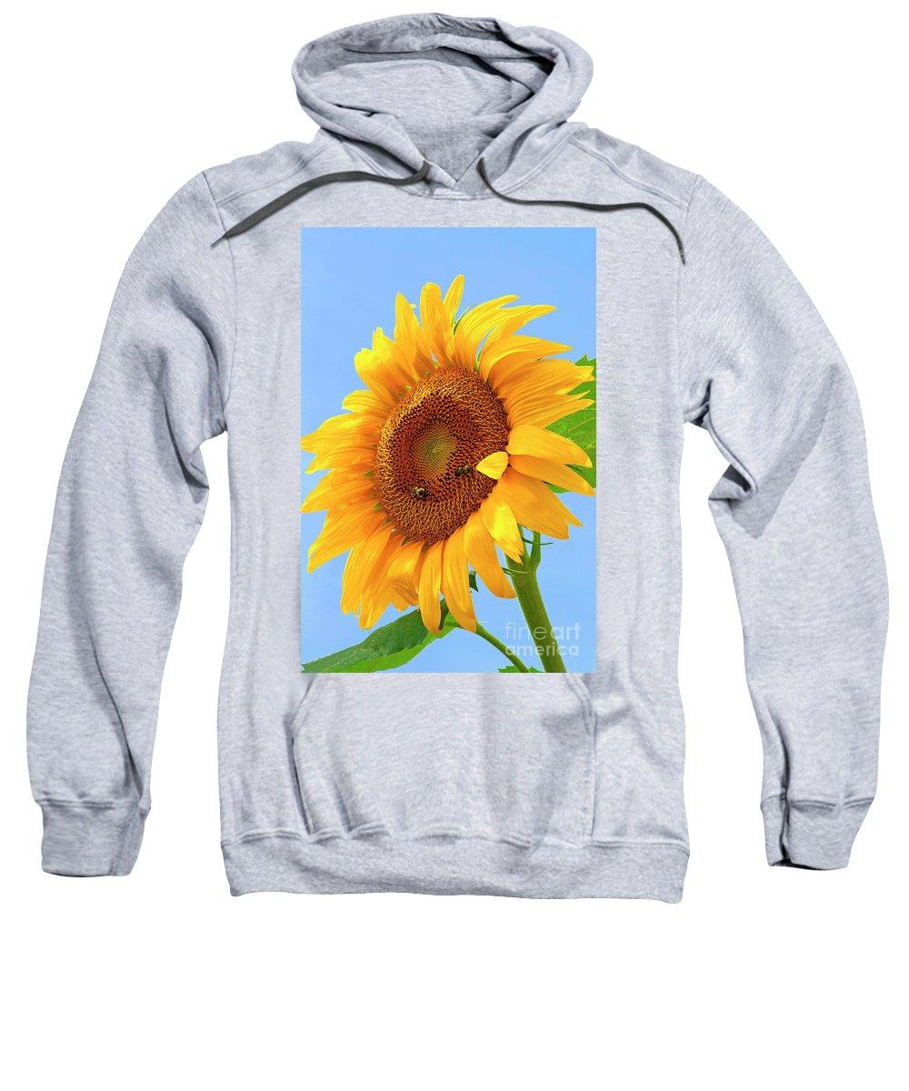 Sunflower Sweatshirt featuring the photograph Sunflower Joy by Regina Geoghan