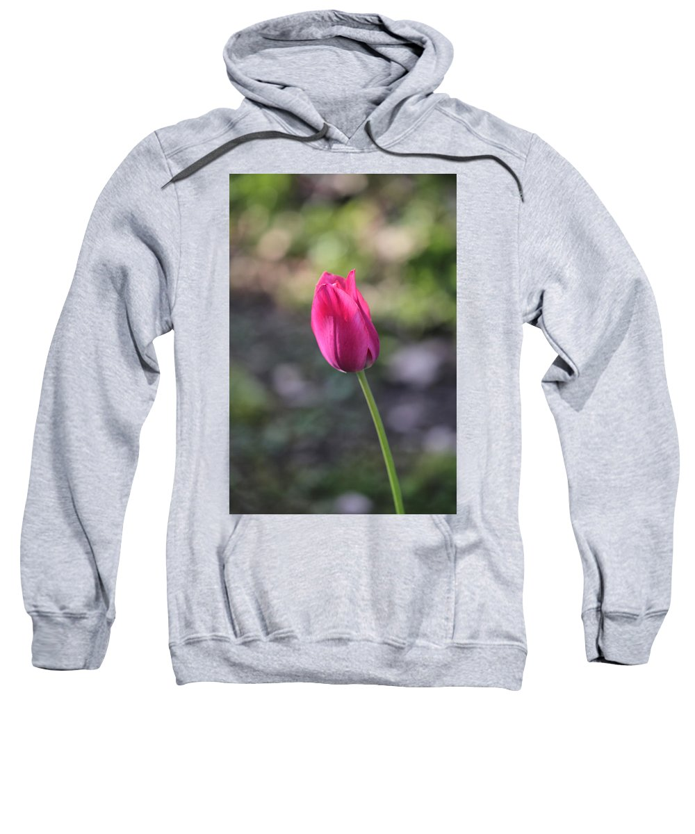 Pink Sweatshirt featuring the photograph Take A Bow by Theresa Campbell