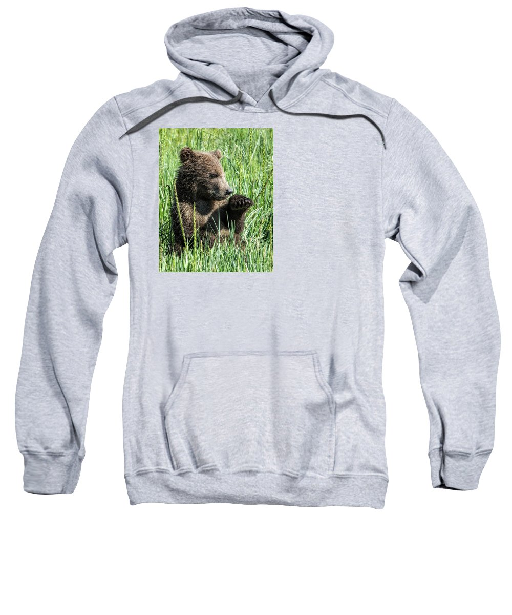 Cub Sweatshirt featuring the photograph Taking A Break by Claudia Kuhn