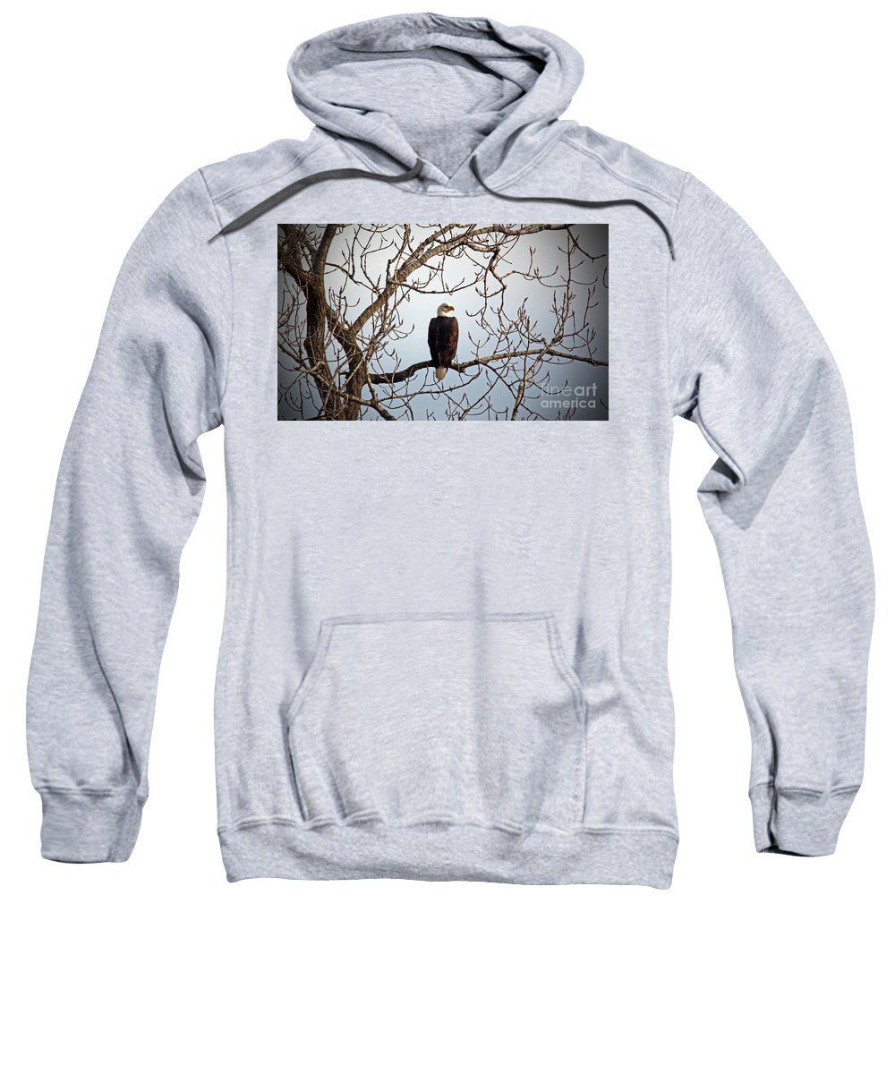 Eagle Sweatshirt featuring the photograph Watching by Jamie Smith