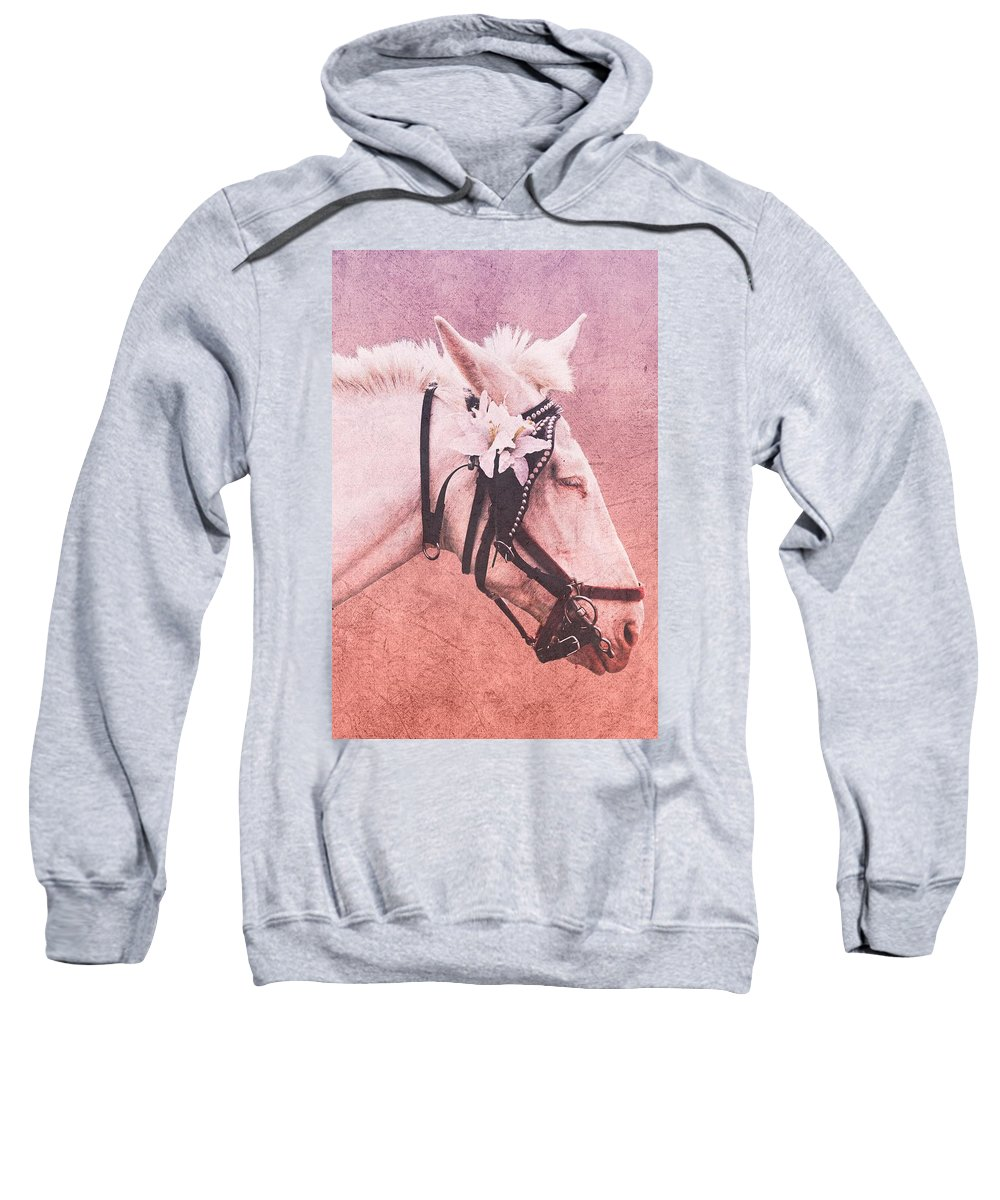 Horse Sweatshirt featuring the photograph Which Way by Alice Gipson