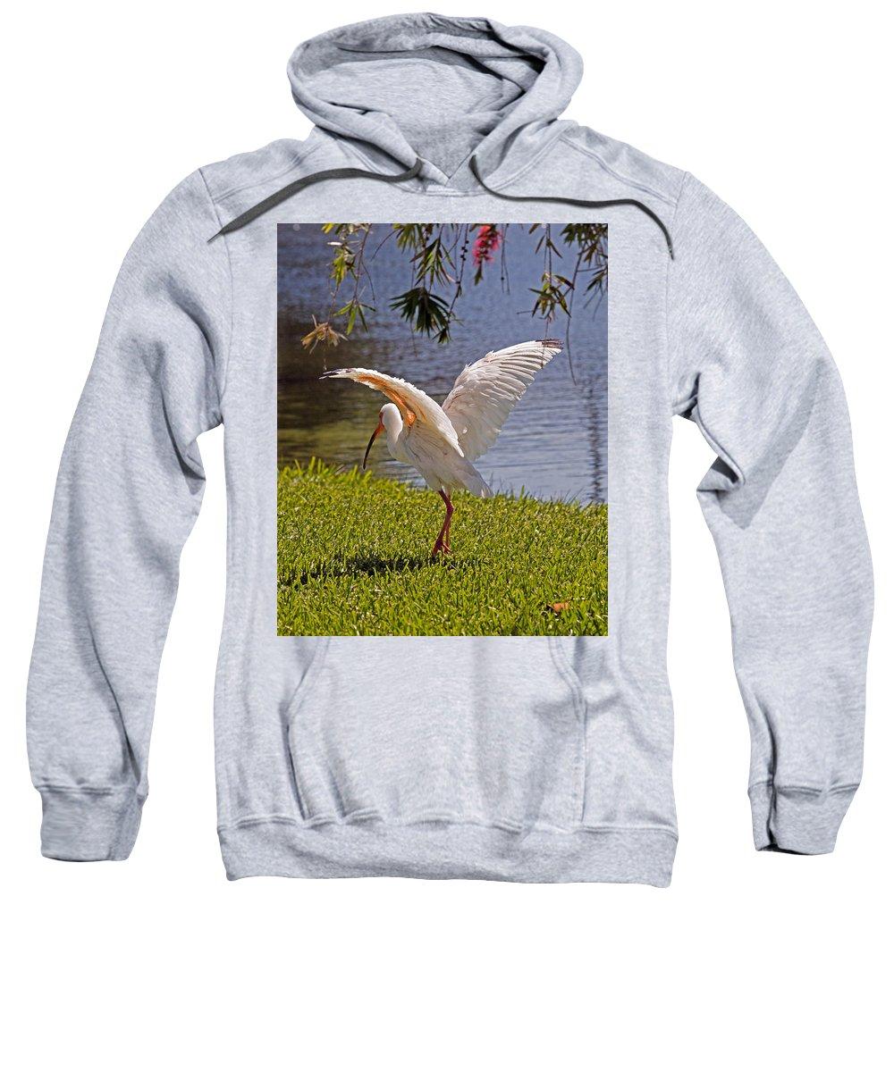 Ibis; White; Bird; Florida; Frog; Pollywogs; Pond; Seabird; Shore; Coast; Water; Fowl; Waterfowl; Fe Sweatshirt featuring the photograph White Ibis by Allan Hughes