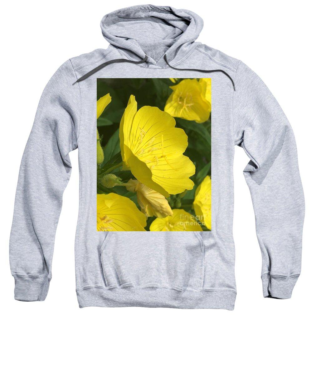Yellow Evening Primrose Sweatshirt featuring the photograph Yellow Evening Primrose by CAC Graphics