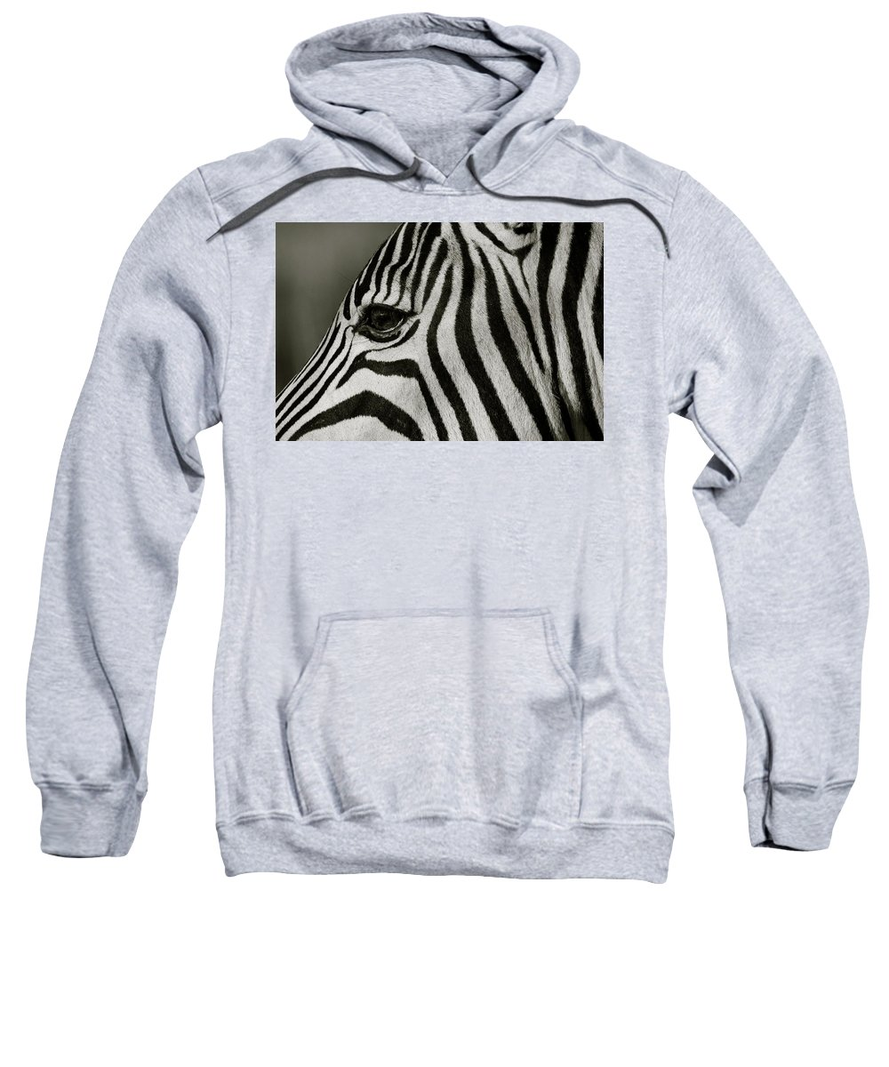 Zebra Sweatshirt featuring the photograph Zebra by Suzanne Morshead