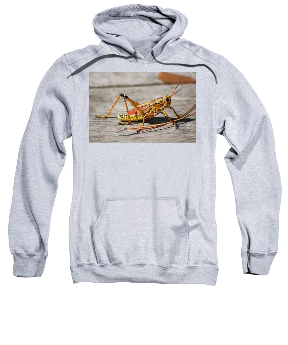Lubber Grasshopper Sweatshirt featuring the photograph 10- Lubber Grasshopper by Joseph Keane