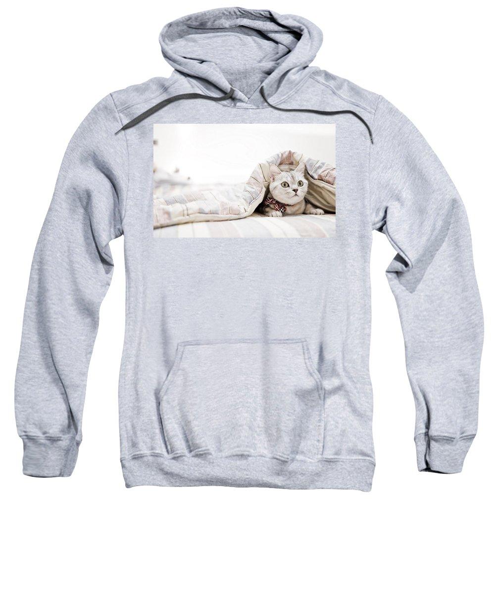 Cat Sweatshirt featuring the digital art Cat by Bert Mailer