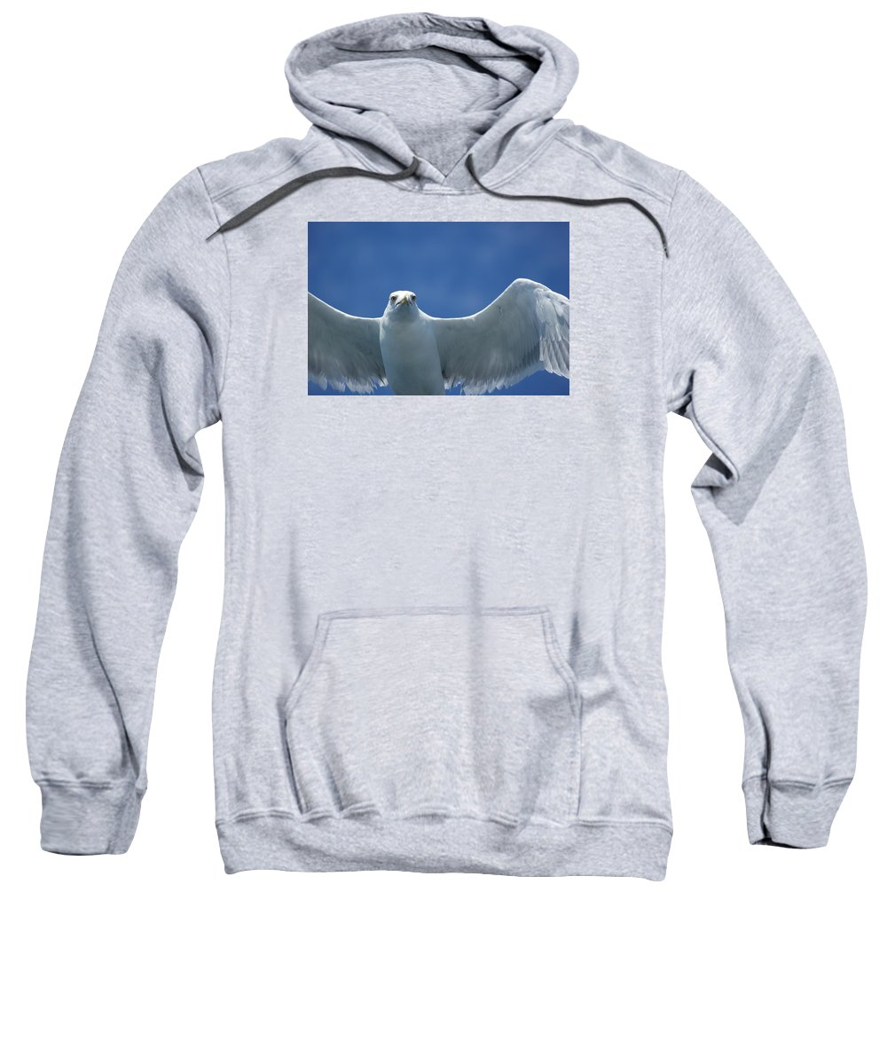 Bird Sweatshirt featuring the photograph Seagull by FL collection
