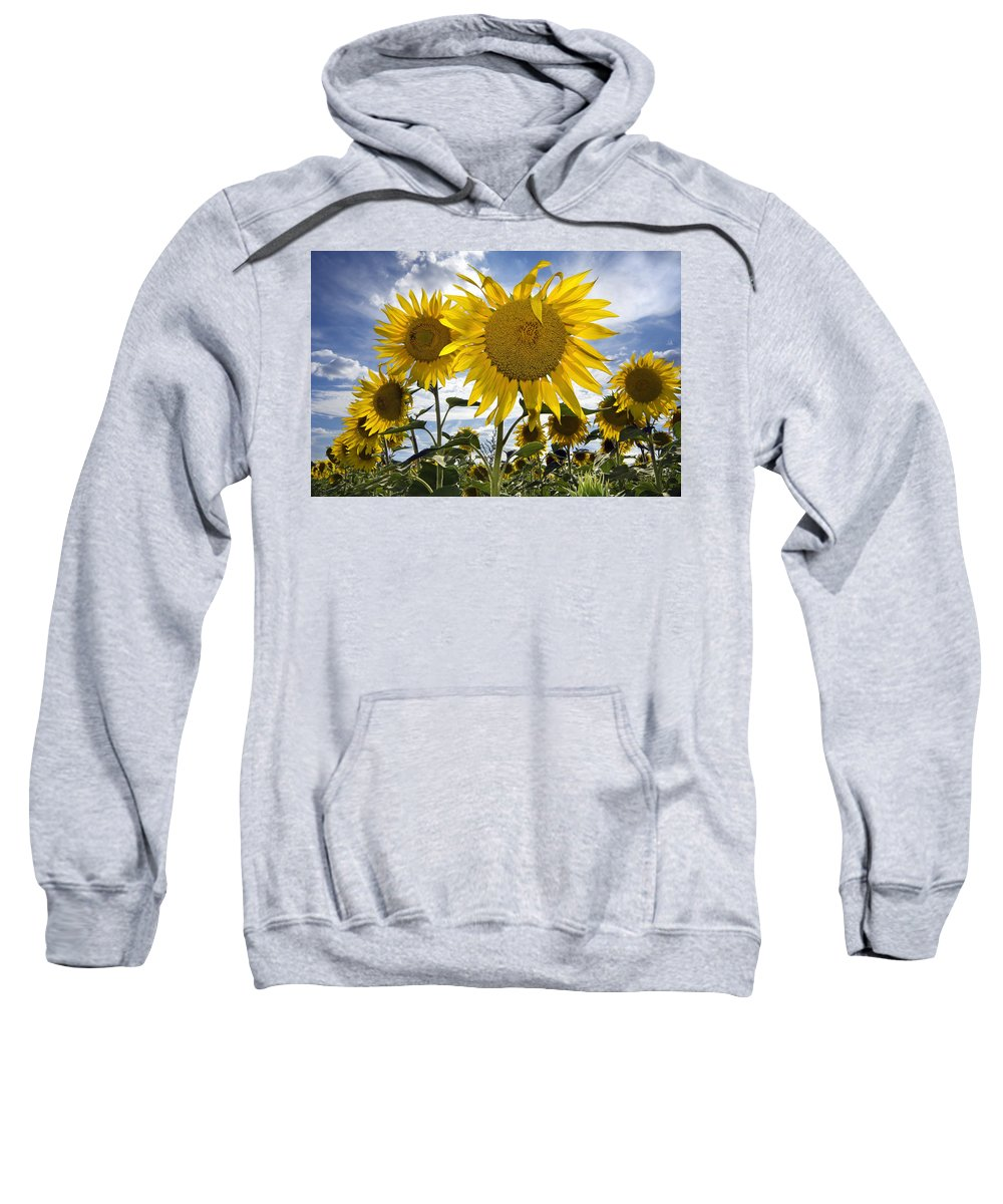 Common Sunflower Sweatshirt featuring the photograph 150403p079 by Arterra Picture Library