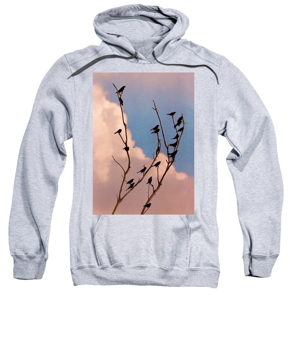 Birds Sweatshirt featuring the photograph 19 Blackbirds by Steve Karol