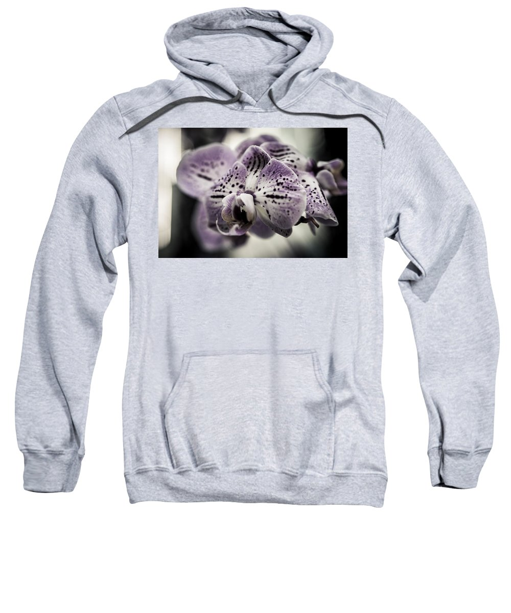 Beautiful Sweatshirt featuring the photograph Morning Sunshine by Miguel Winterpacht
