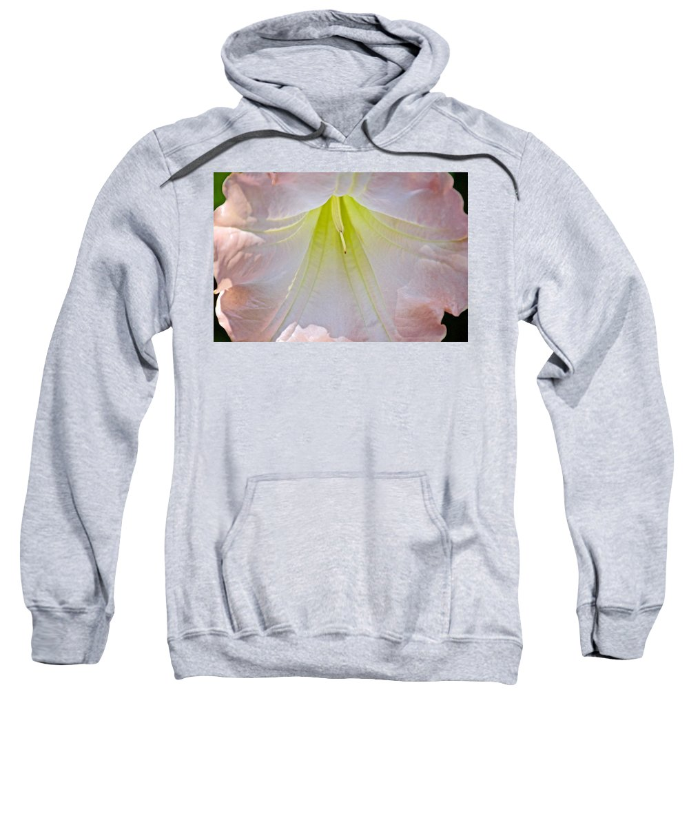 Peach Angel's Trumpet At Pilgrim Place In Claremont Sweatshirt featuring the photograph Peach Angel's Trumpet At Pilgrim Place In Claremont-california by Ruth Hager