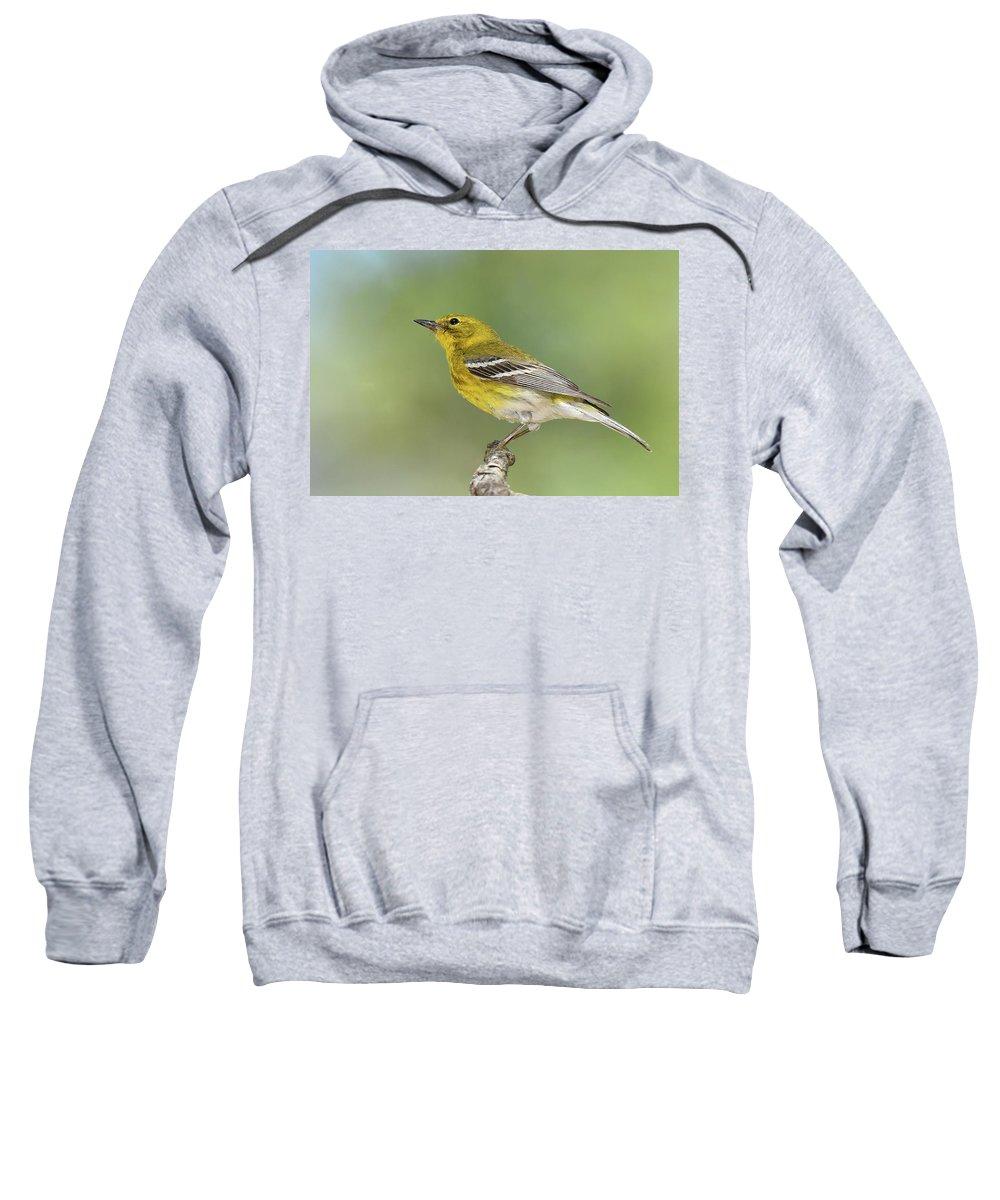 Bird Sweatshirt featuring the photograph Pine Warbler by Alan Lenk