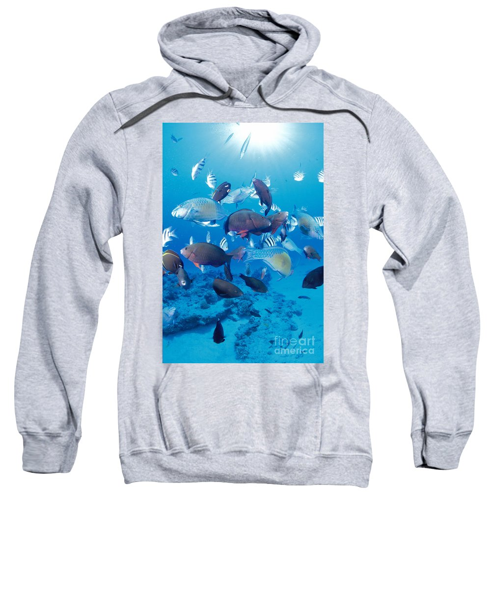 Afternoon Sweatshirt featuring the photograph Saipan Marine Life by Dave Fleetham - Printscapes