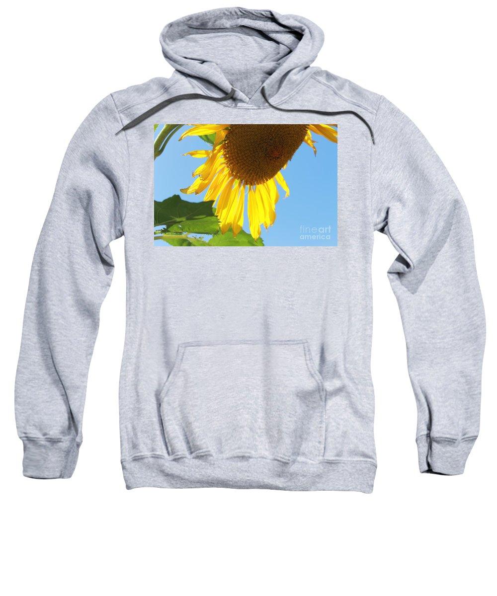 Sunflower Sweatshirt featuring the photograph Sunflower by Pamela Walrath