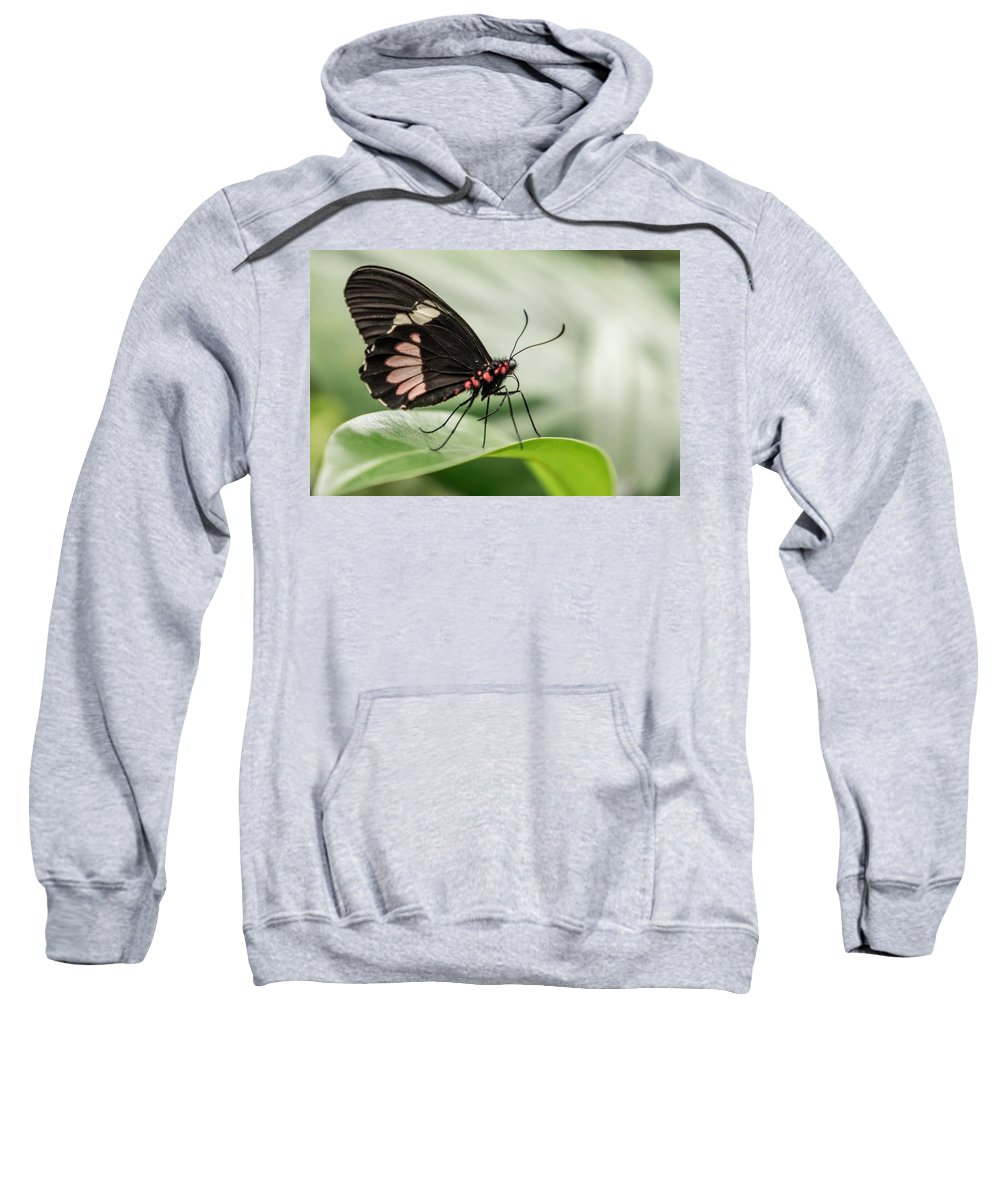 Butterfly Sweatshirt featuring the photograph Butterfly by FL collection