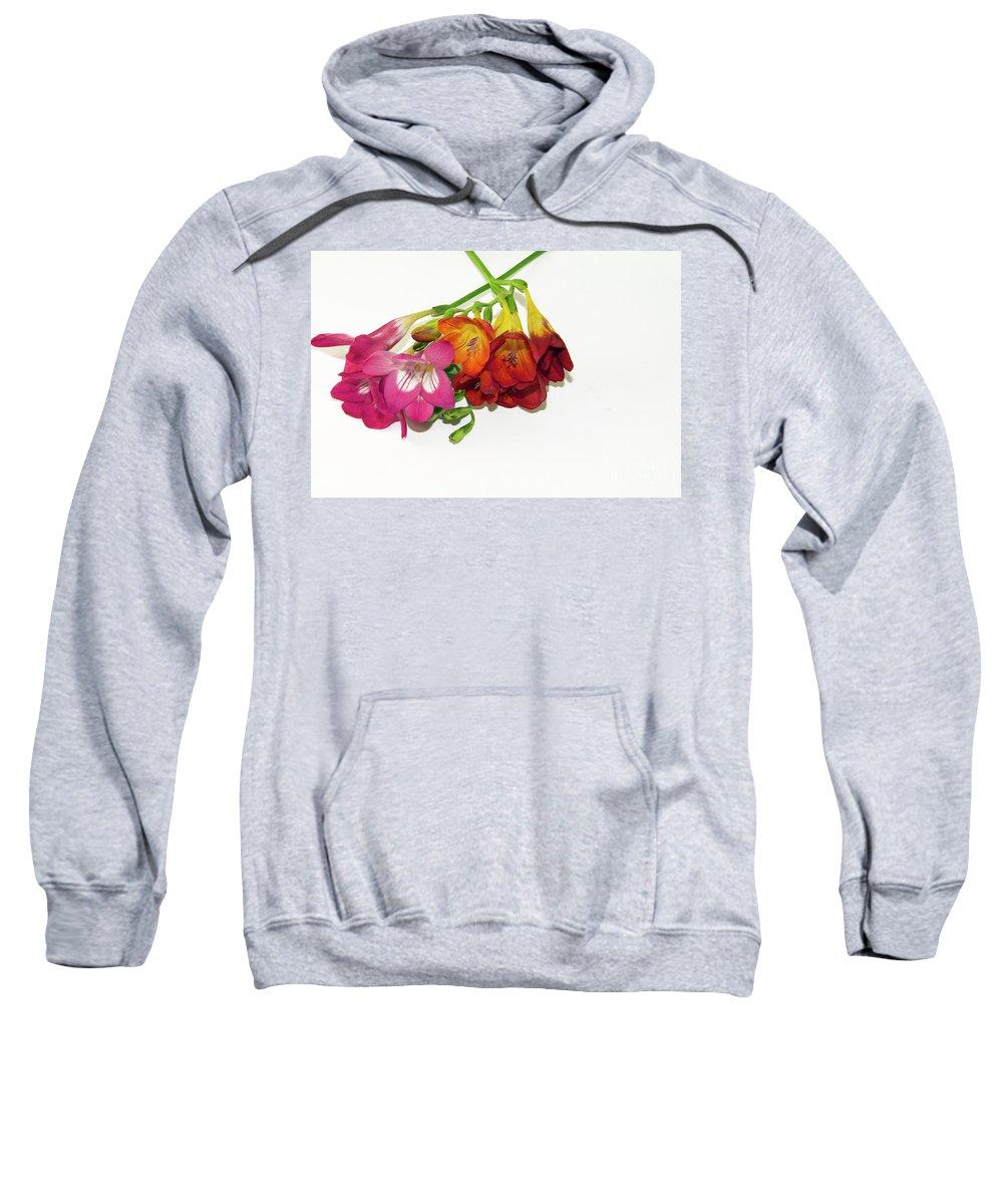 Flowers Sweatshirt featuring the photograph Colorful Freesia by Elvira Ladocki
