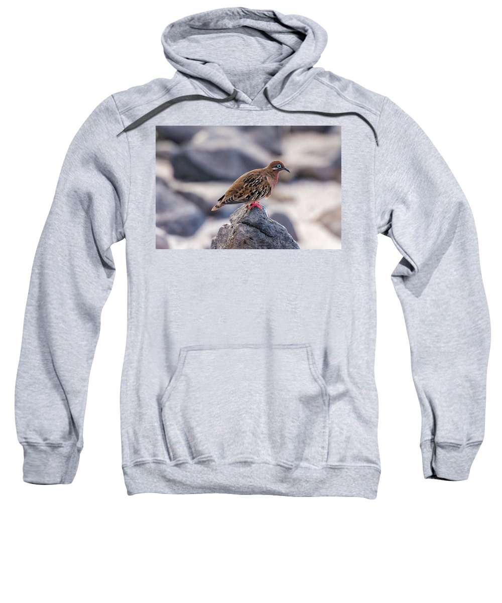 Galapagos Sweatshirt featuring the photograph Galapagos Dove In Espanola Island. by Marek Poplawski
