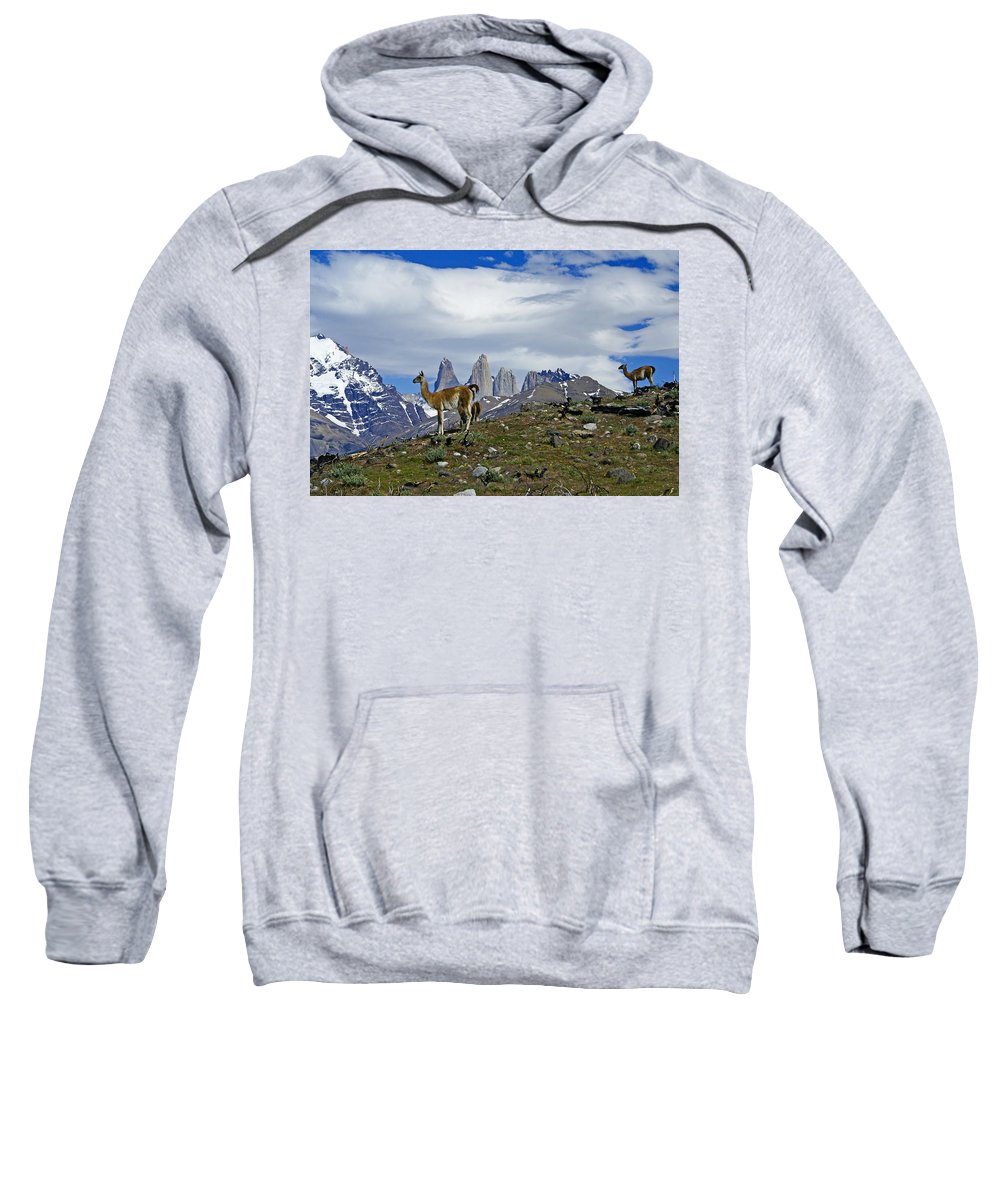 Patagonia Sweatshirt featuring the photograph Guanacos In Torres Del Paine by Michele Burgess