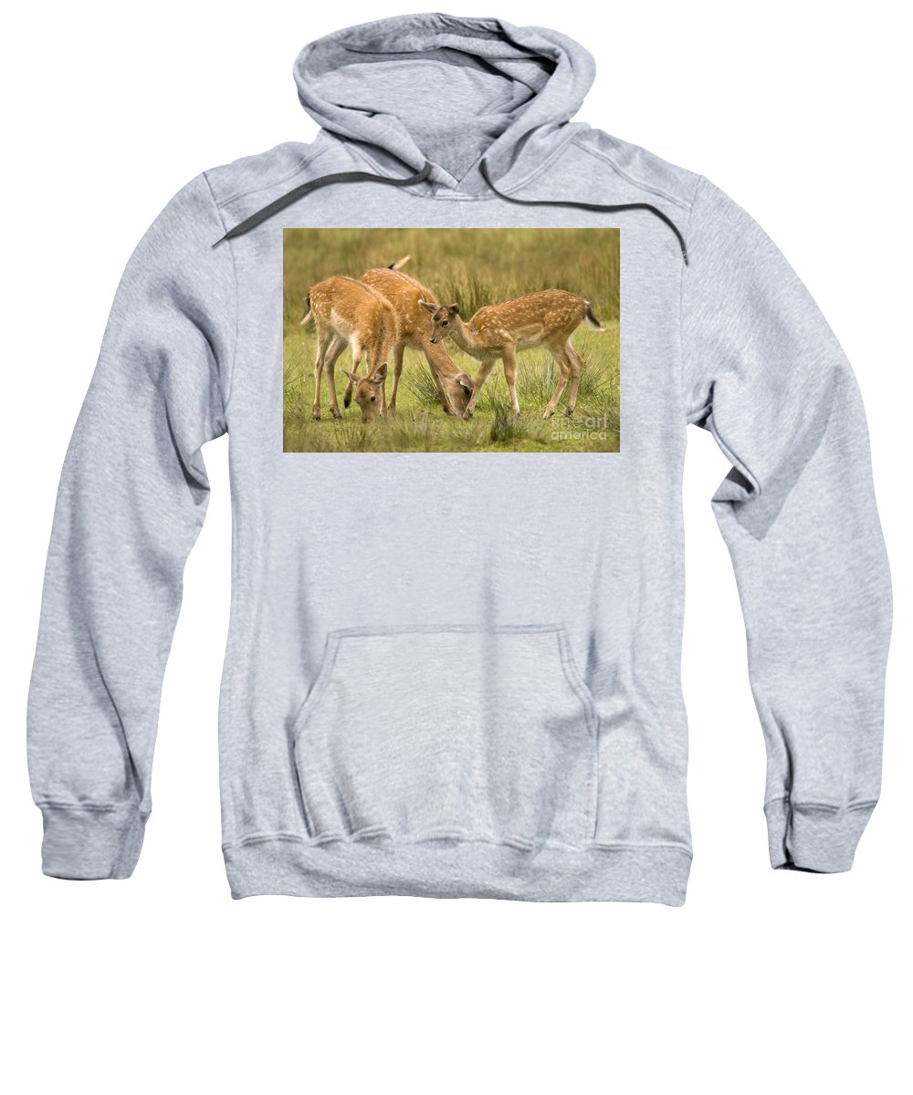 Fallow Deer Sweatshirt featuring the photograph Lunch Time by Angel Tarantella