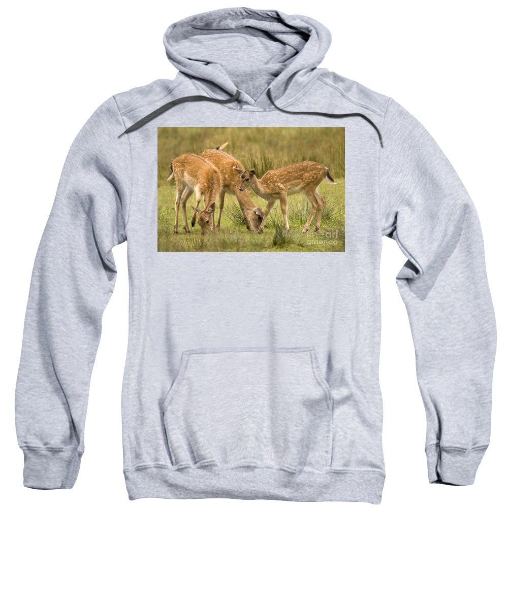 Fallow Deer Sweatshirt featuring the photograph Lunch Time by Angel Ciesniarska