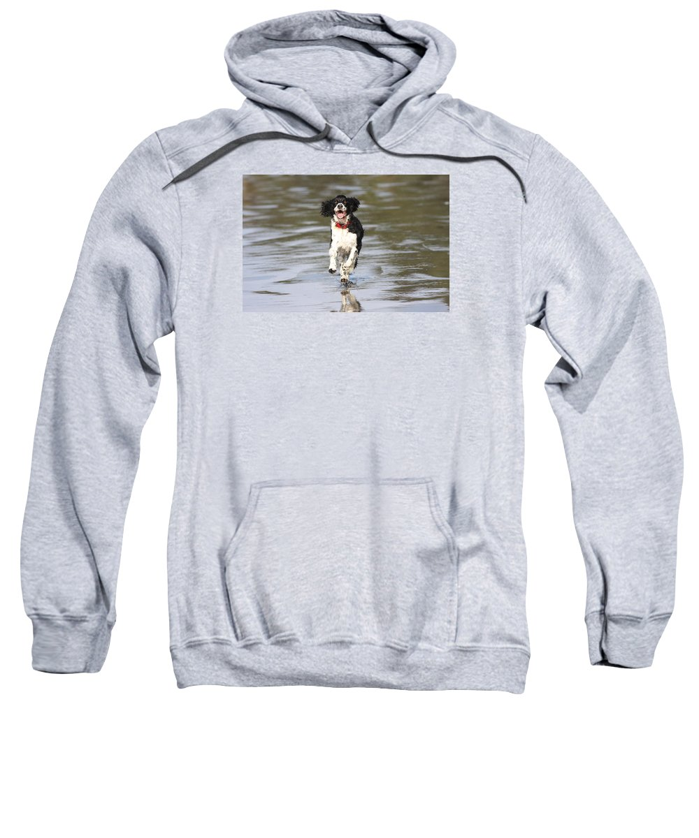 English Springer Sweatshirt featuring the photograph Pepper by Gary Wing