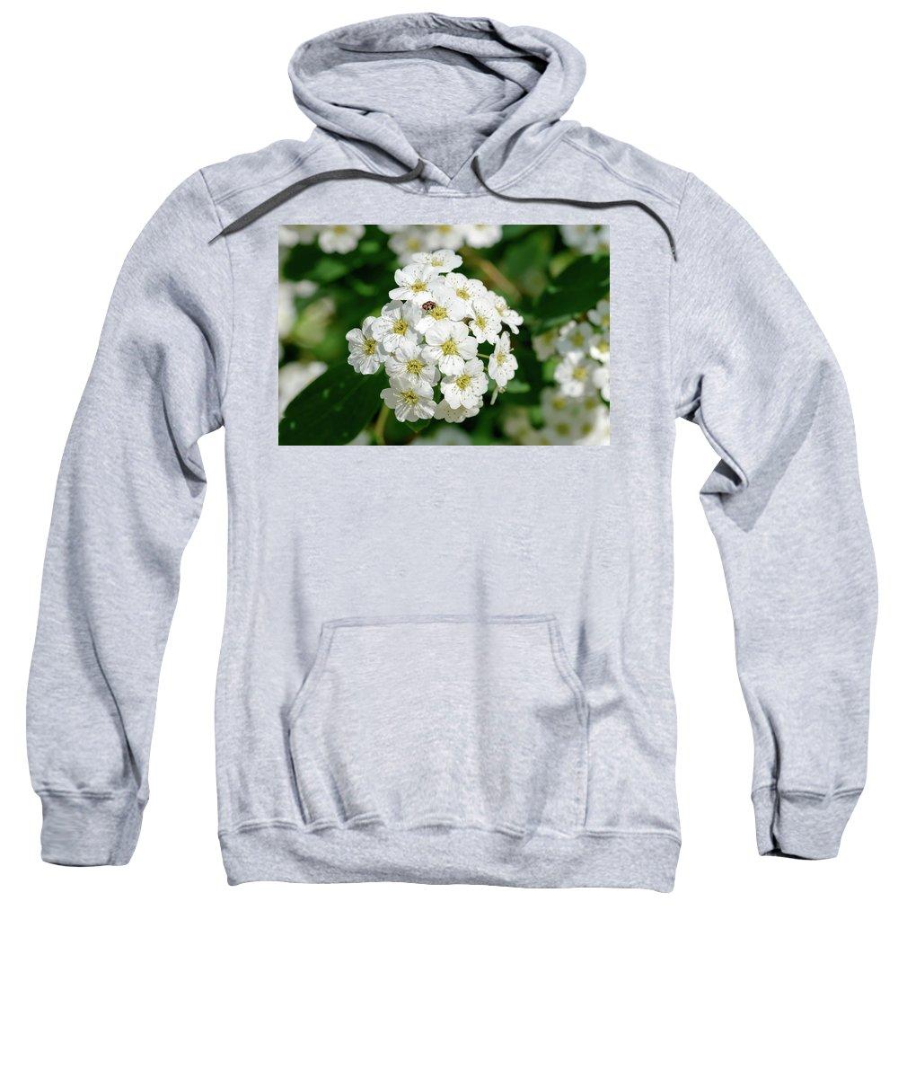 Rosaceae Sweatshirt featuring the photograph White Spiraea Flower by Alain De Maximy