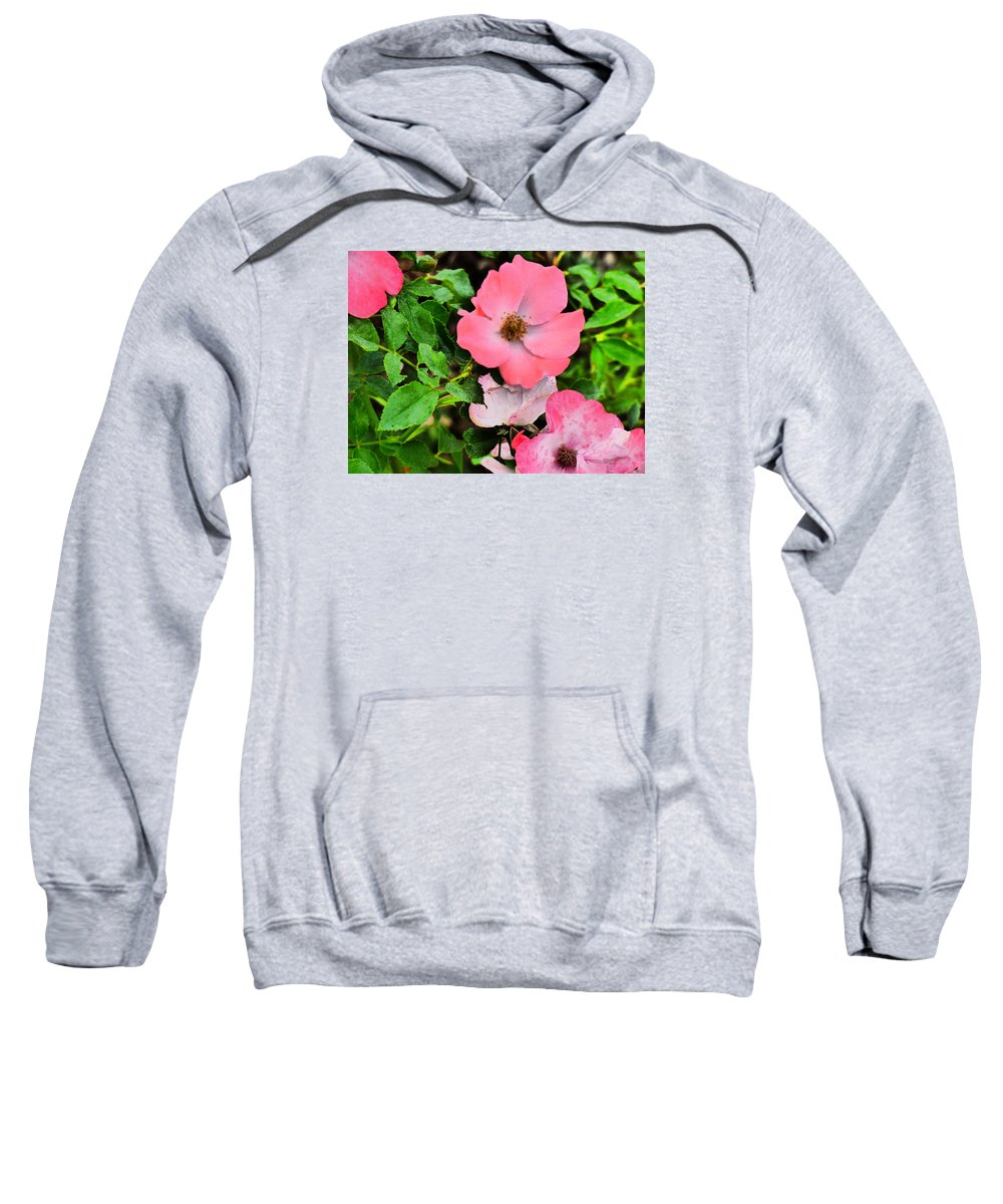Flowers Gardens Iadho Photograaphy Sweatshirt featuring the photograph Velvet Nights by Paul Stanner
