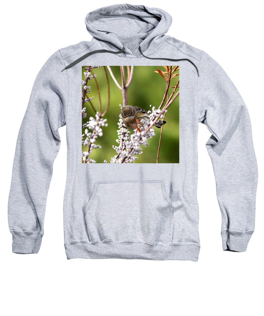 Warbler Sweatshirt featuring the photograph 3172 - Warbler by Travis Truelove