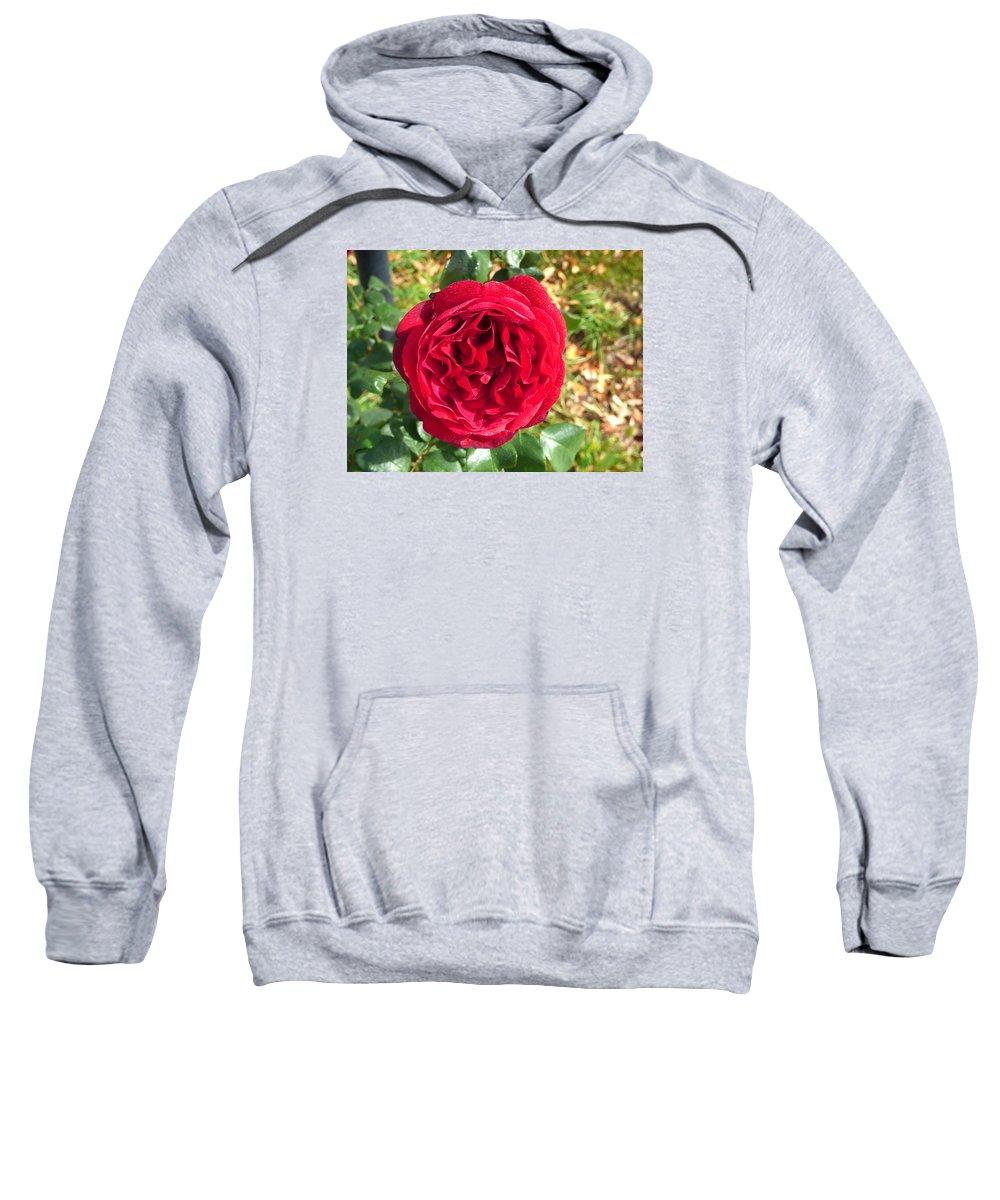 Flower Garden Idaho Photography Sweatshirt featuring the photograph La Vie En Rose by Paul Stanner