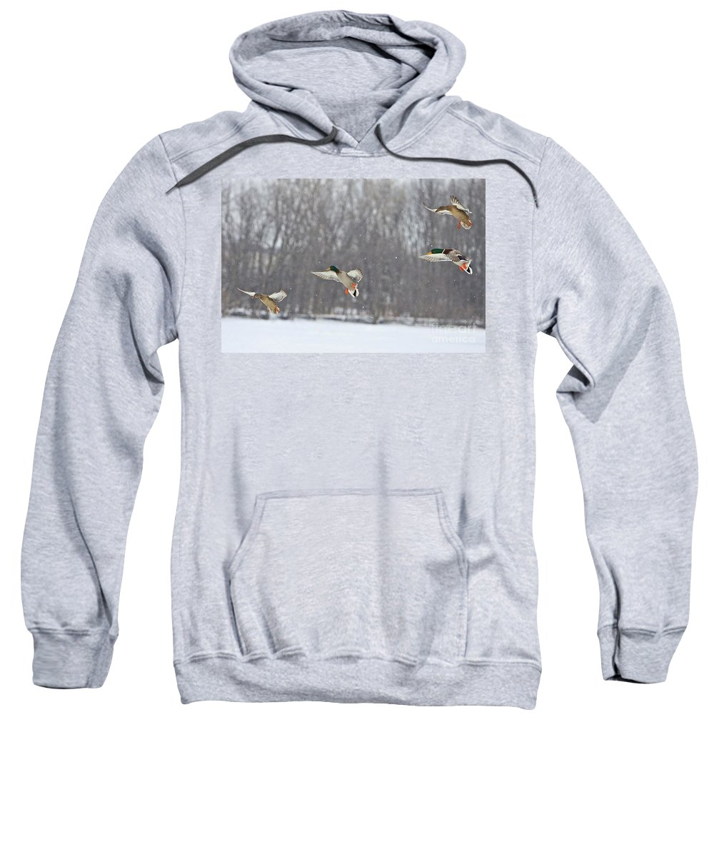 Ducks Sweatshirt featuring the photograph 4 In A Row by Robert Pearson