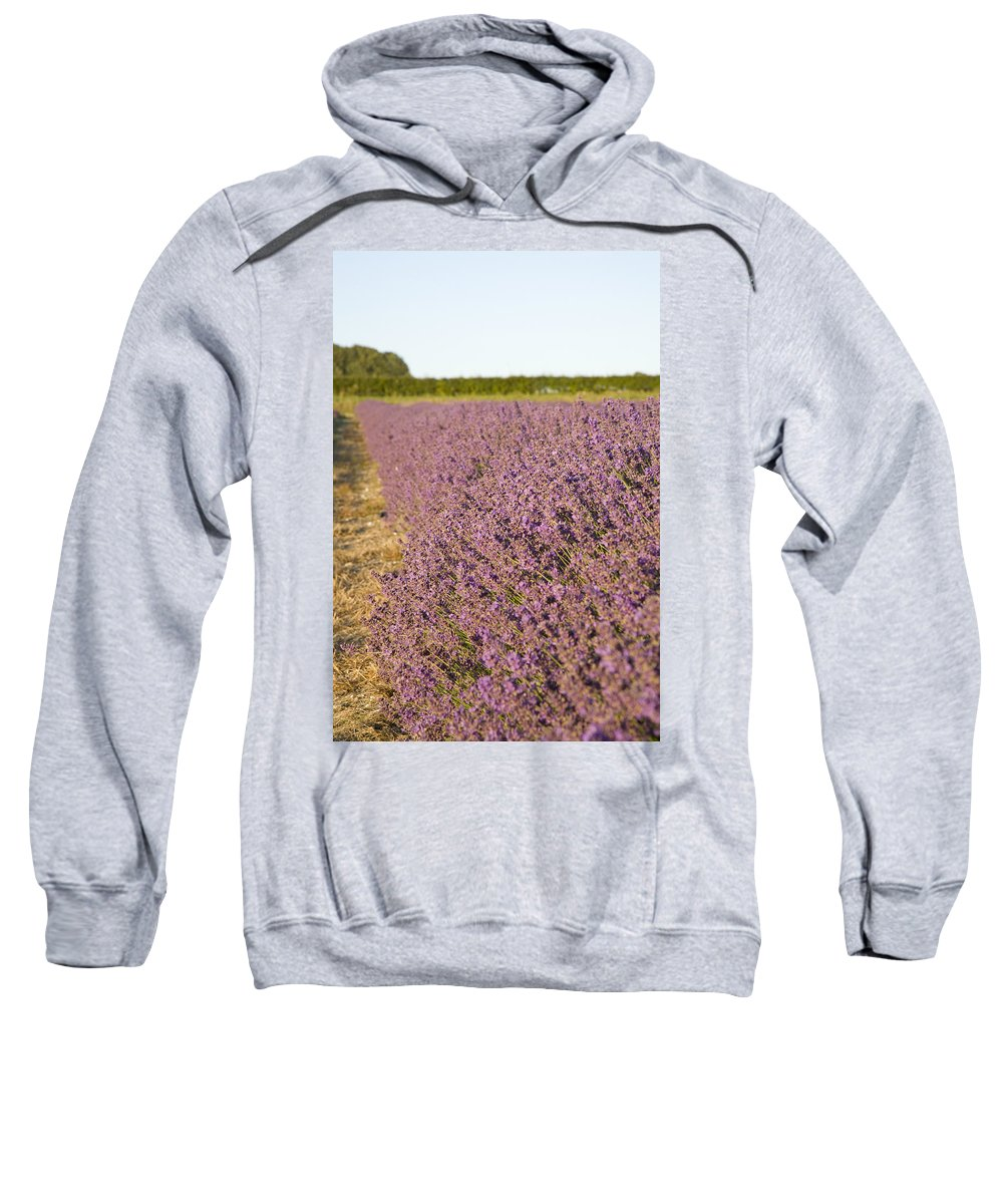 Lavender Sweatshirt featuring the photograph Lavender Fields by Ian Middleton
