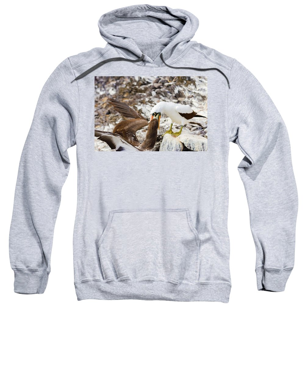 Galapagos Sweatshirt featuring the photograph Nazca Booby In Galapagos by Marek Poplawski