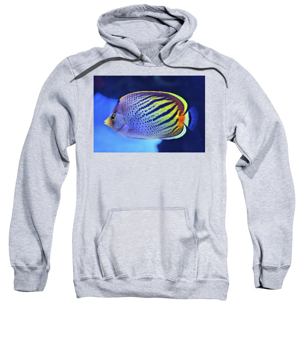 7d Mark Ii Sweatshirt featuring the photograph Tropical Fish by Mark Chandler