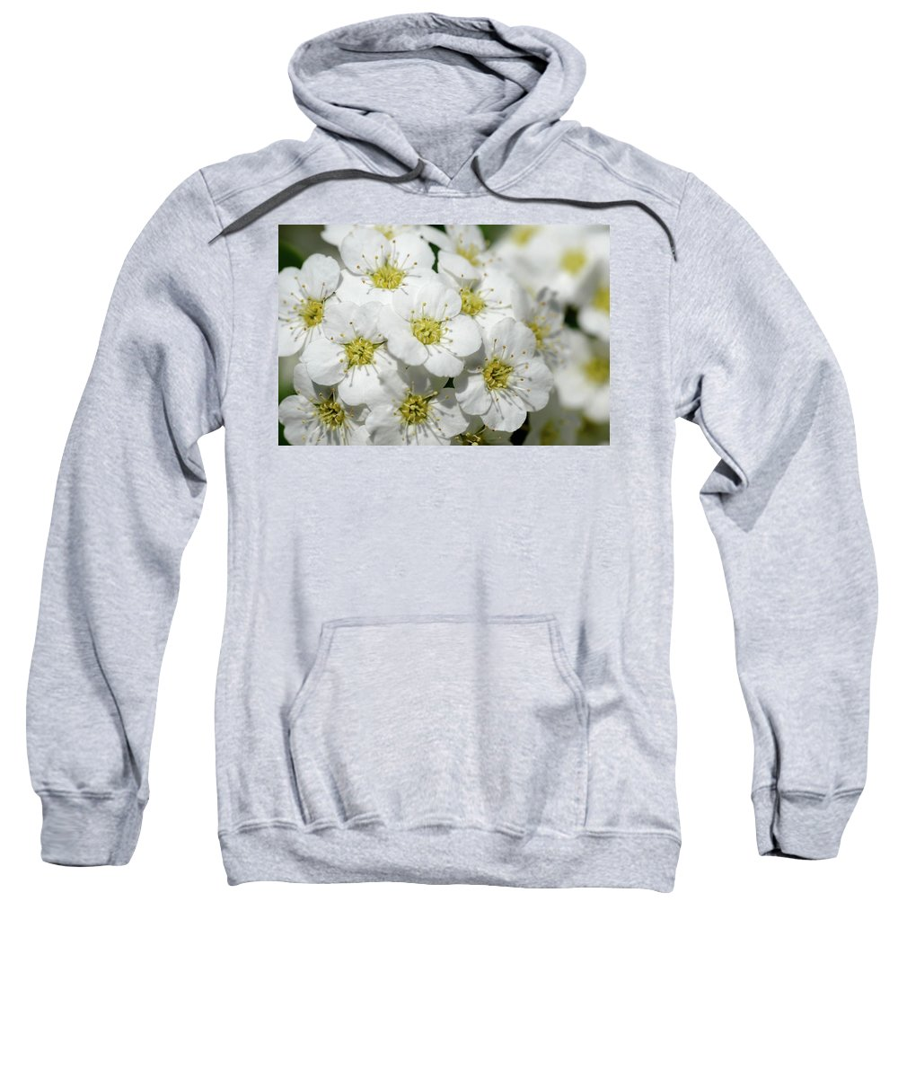 Rosaceae Sweatshirt featuring the photograph White Spiraea Flower by Alain De Maximy