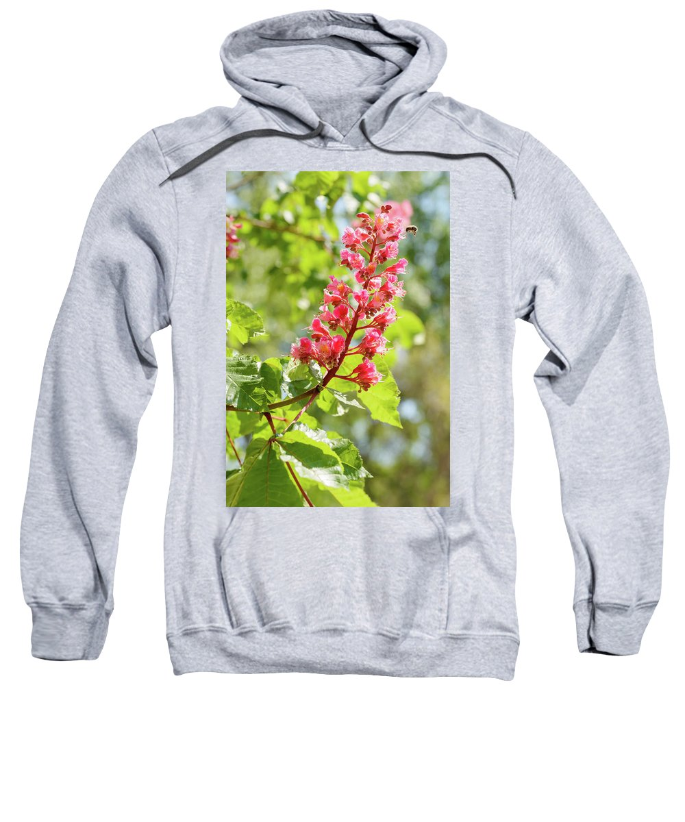 Aesculus Sweatshirt featuring the photograph Aesculus X Carnea, Or Red Horse-chestnut Flower by Alain De Maximy
