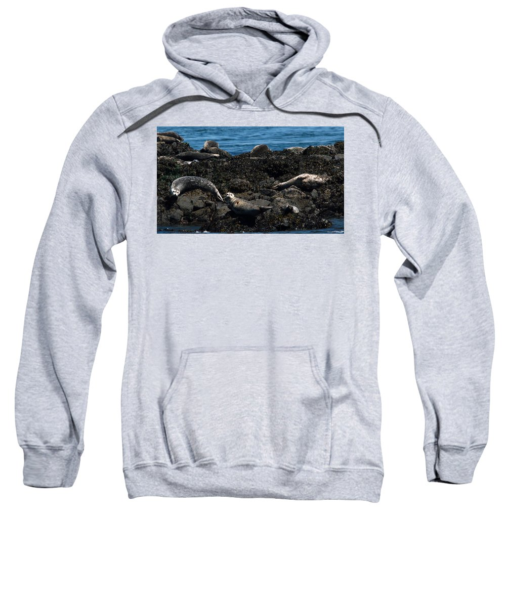 Swan Sweatshirt featuring the photograph Clear Day Barn by Linda Kerkau