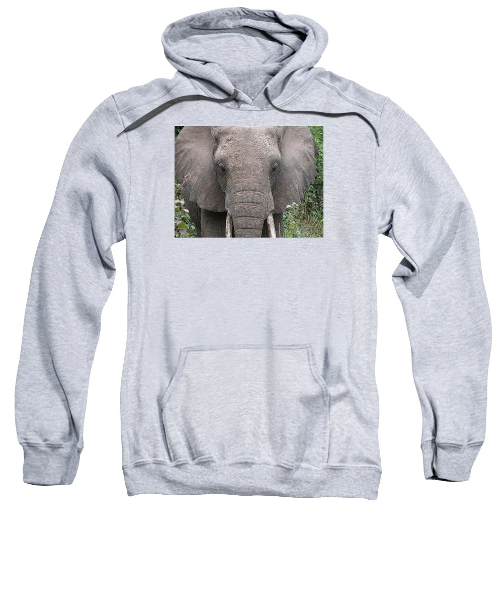 Elephants Sweatshirt featuring the photograph Elephant by FL collection