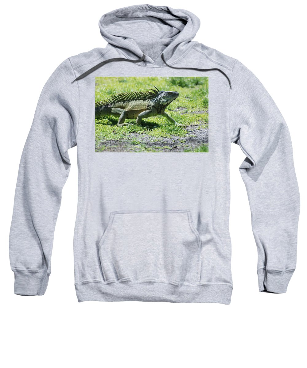 Macro Sweatshirt featuring the photograph I Iguana by Rob Hans