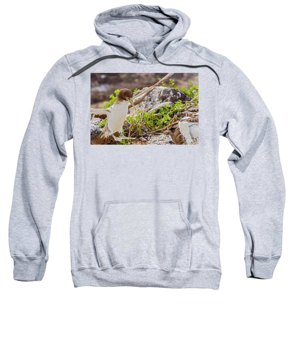 Galapagos Sweatshirt featuring the photograph Juvenile Nazca Booby In Galapagos by Marek Poplawski