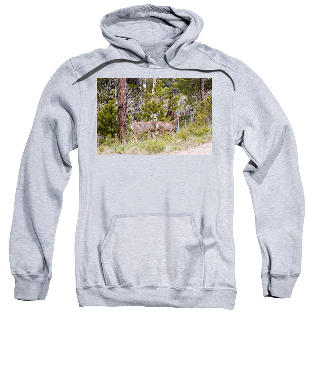 Deer Sweatshirt featuring the photograph Mule Deer In The Pike National Forest Of Colorado by Steve Krull