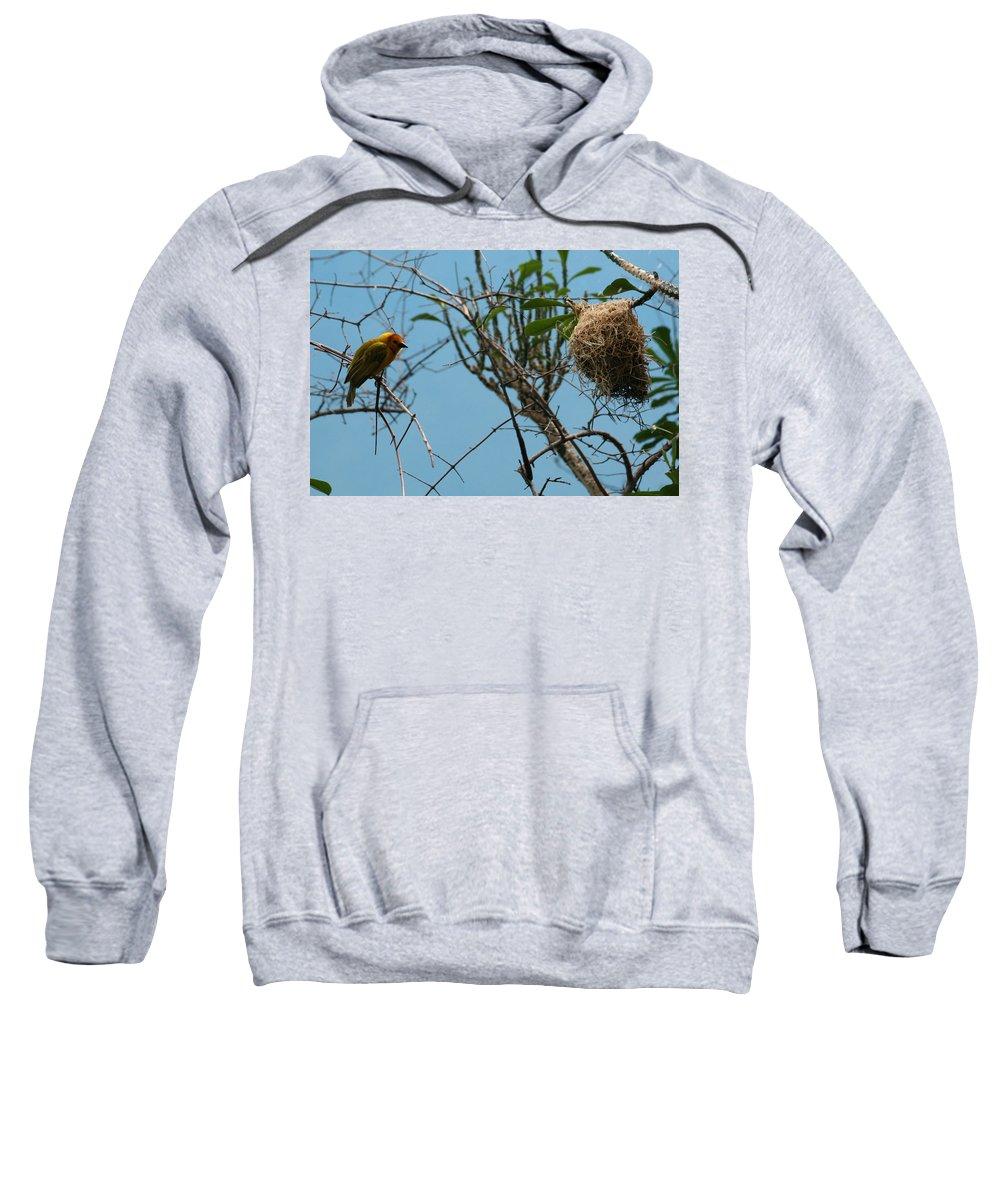 Bird Sweatshirt featuring the photograph A Bird In 3d by Paul SEQUENCE Ferguson       sequence dot net