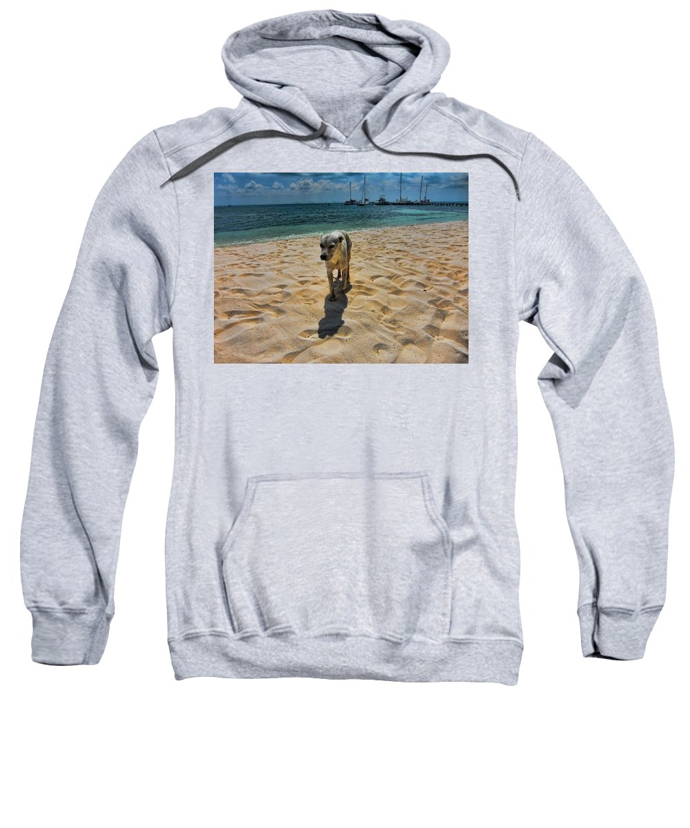 Dog Sweatshirt featuring the photograph A Dog's Life by Douglas Barnard