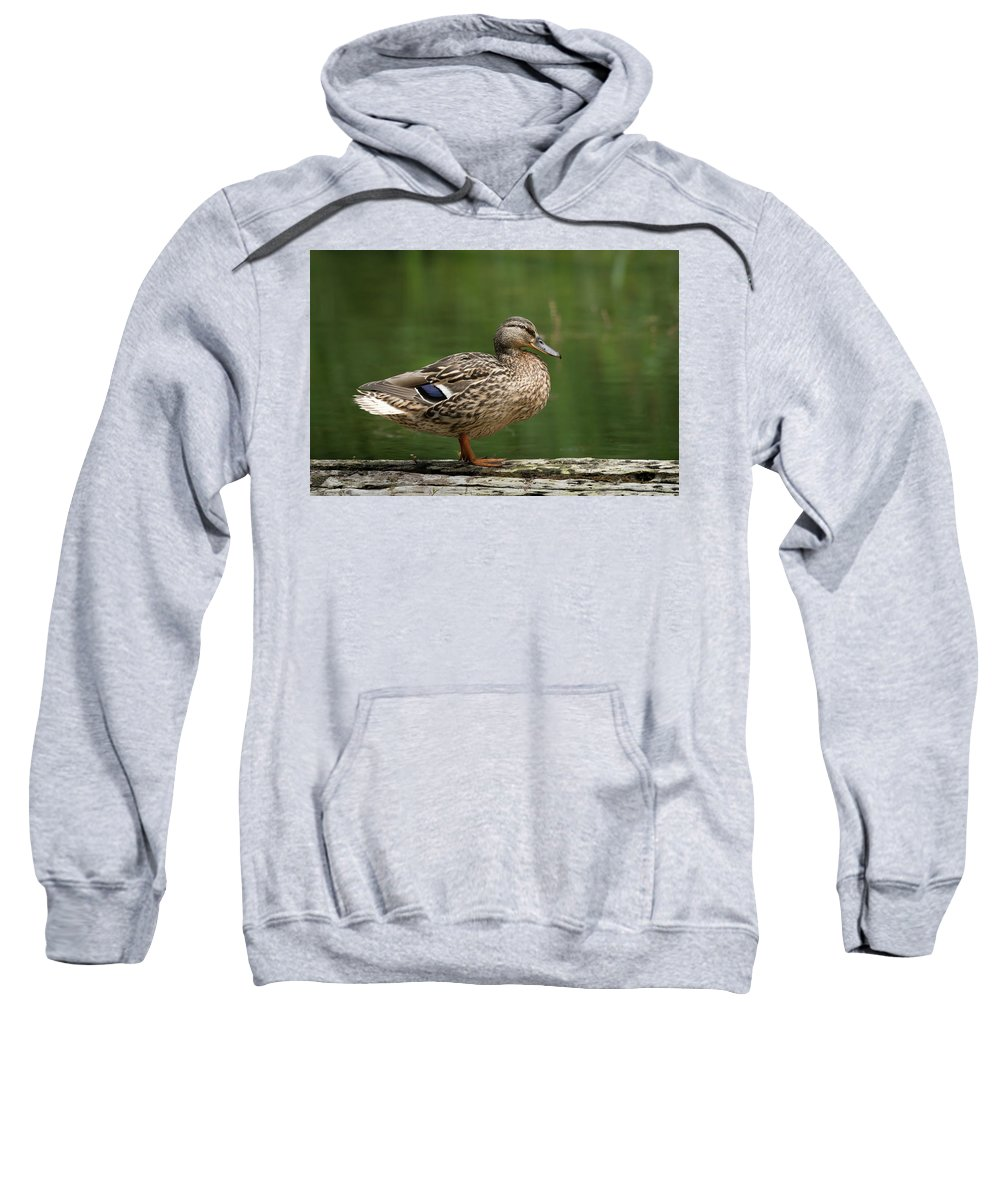 Female Sweatshirt featuring the photograph A Female Mallard Standing On A Piece Of Wood by Stefan Rotter