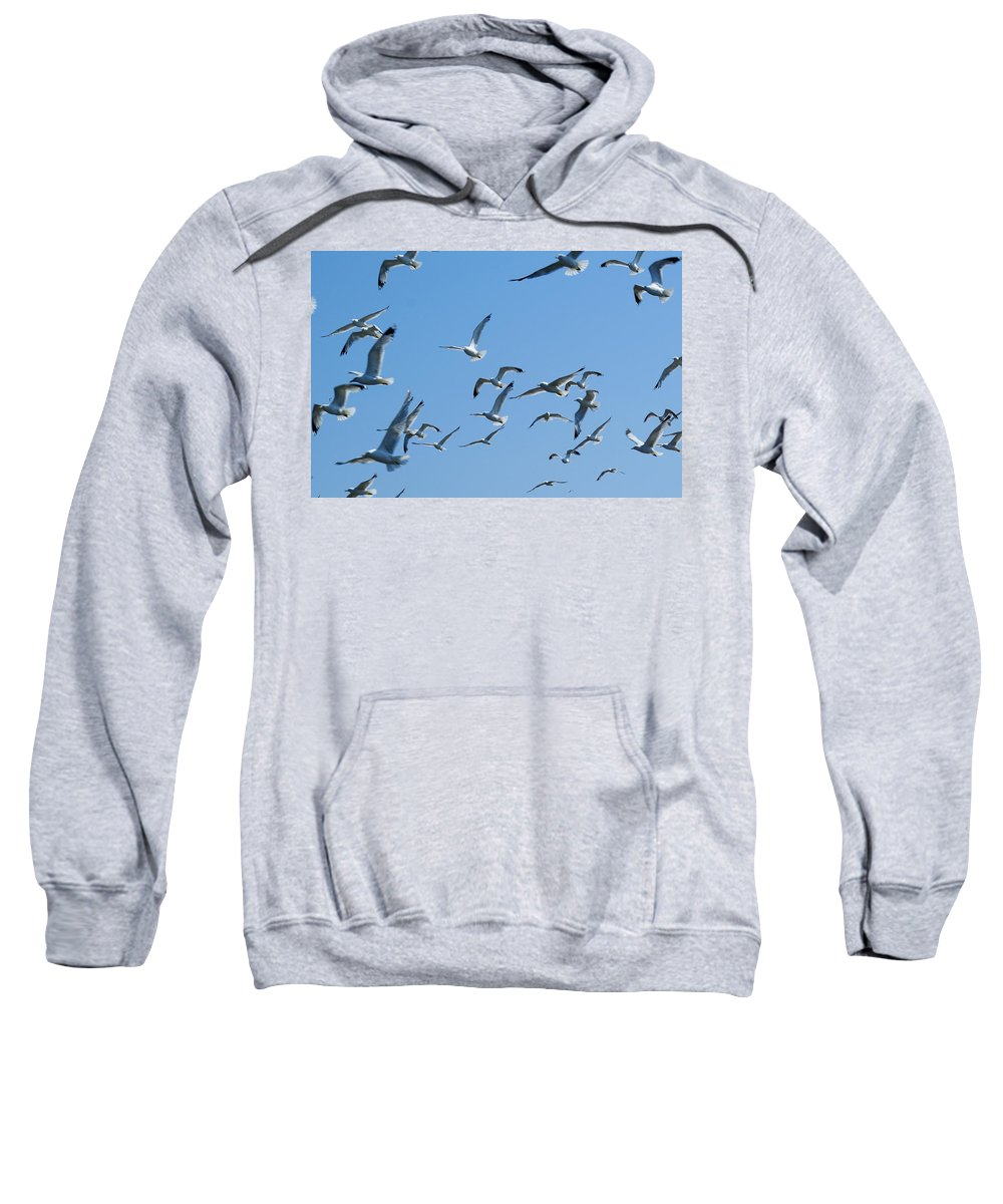 Birds Sweatshirt featuring the photograph A Flock Of Seagulls by Ben Upham III