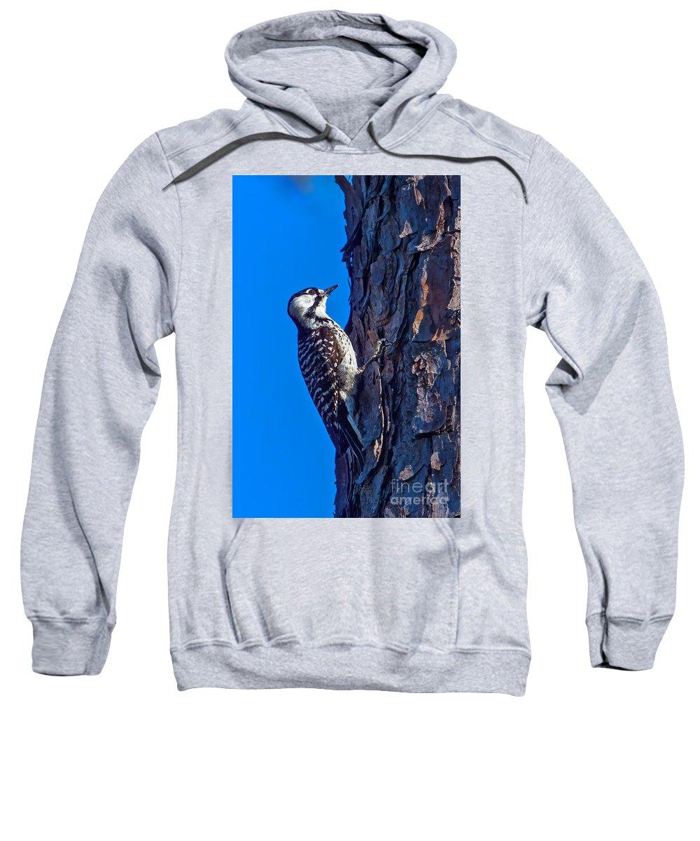 Rare Bird Sweatshirt featuring the photograph A Rare Bird by Gary Holmes