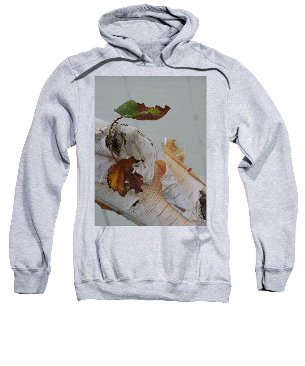 Birch Sweatshirt featuring the photograph A Touch Of Fall by Gale Cochran-Smith
