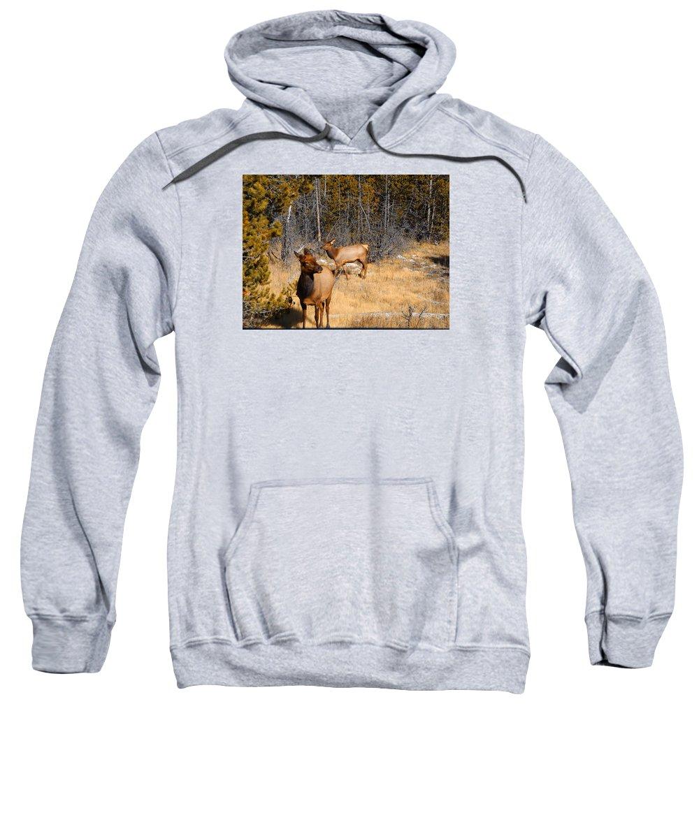 Elk Sweatshirt featuring the photograph A Warm Welcome by Adam Cornelison